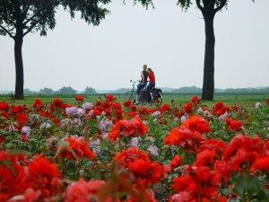 Rosenroute Lottum Radfahren