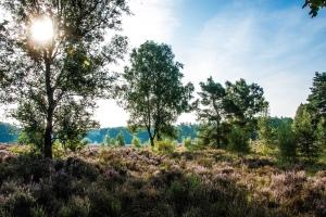 Nationalpark De Meinweg © Tourismusbüro Limburg